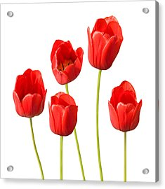 Red Tulips White Background Acrylic Print by Natalie Kinnear