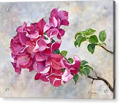 Red Violet Bougainvillea With Textured Background Acrylic Print by Sharon Freeman