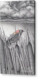 Red-winged Blackbird Acrylic Print by Wayne Hardee