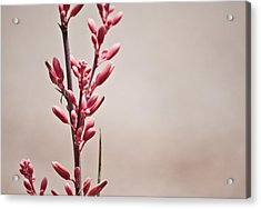 Red Yucca Acrylic Print by Swift Family
