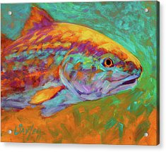 Redfish Portrait Acrylic Print by Savlen Art