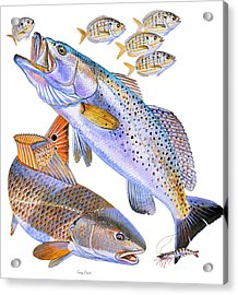 Redfish Trout Acrylic Print by Carey Chen