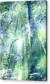 Redwood Dreams Acrylic Print by Nicole Swanger