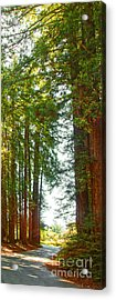 Redwood Wall Mural Panel 2 Acrylic Print by Artist and Photographer Laura Wrede