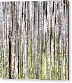 Reeds Background Acrylic Print by Tom Gowanlock