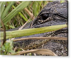 Reflection In His Eyes Acrylic Print by Penny Lisowski