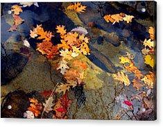 Reflection Acrylic Print by Marcia Lee Jones