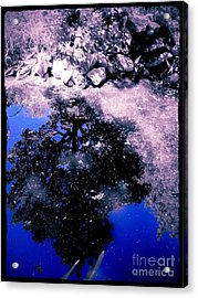 Reflection Pool Acrylic Print by Garren Zanker