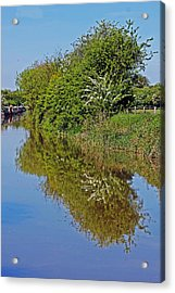 Reflections Of Trees Acrylic Print by Tony Murtagh