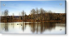 Reflections On Golden Pond Acrylic Print by Christina Rollo