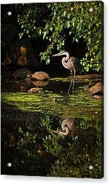 Reflective Heron Acrylic Print by Sylvia J Zarco