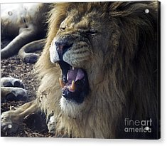 Regal Of Menace Acrylic Print by Rick Bransby