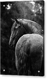 Regal Acrylic Print by Pamela Hagedoorn