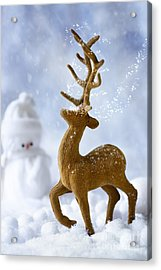 Reindeer In Snow Acrylic Print by Amanda And Christopher Elwell