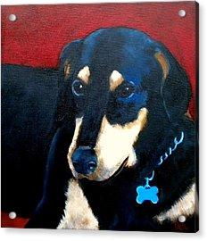 Remembering Doby Acrylic Print by Debi Starr