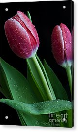 Reminder Of Spring Acrylic Print by Tracy  Hall