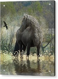 Remme And The Crow Acrylic Print by Fran J Scott