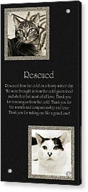 Rescued Acrylic Print by Andee Design