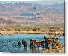 Rest Stop Acrylic Print by Tammy Espino