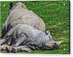 Restful Rhinoceros Acrylic Print by Camille Lopez