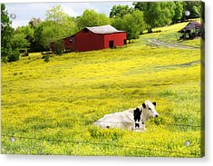 Resting Place Acrylic Print by Amy Tyler