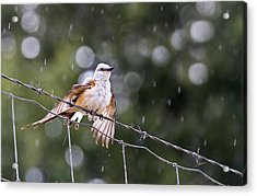 Revelling In The Rain Acrylic Print by Annette Hugen