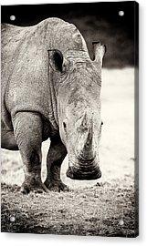 Rhino After The Rain Acrylic Print by Mike Gaudaur