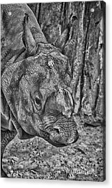 Rhino-black And White V3 Acrylic Print by Douglas Barnard