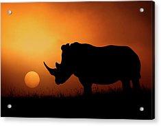 Rhino Sunrise Acrylic Print by Mario Moreno