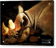 Rhinoceros 20150210brun Acrylic Print by Wingsdomain Art and Photography