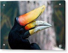 Rhinoceros Hornbill  Acrylic Print by Ernie Echols