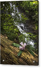Rhododendron At The Falls Acrylic Print by Debra and Dave Vanderlaan