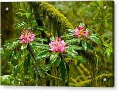 Rhododendron Flowers In A Forest Acrylic Print by Panoramic Images