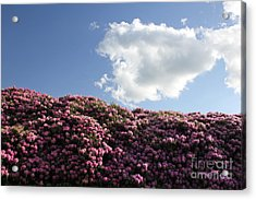 Rhododendron Acrylic Print by Melissa Petrey