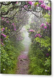 Rhododendron Time In North Carolina Acrylic Print by Bill Swindaman