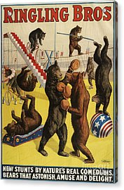 Ringling Bros 1900s Bears Performing Acrylic Print by The Advertising Archives