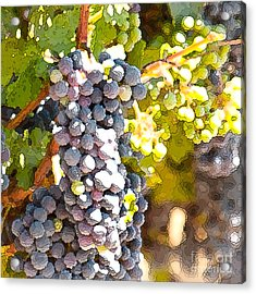 Ripe Grapes Acrylic Print by Artist and Photographer Laura Wrede