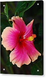 Rise And Shine - Hibiscus Face Acrylic Print by Connie Fox
