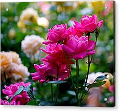 Rittenhouse Square Roses Acrylic Print by Rona Black