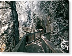 River Boardwalk Acrylic Print by Paul W Faust -  Impressions of Light