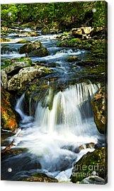 River Flowing Through Woods Acrylic Print by Elena Elisseeva