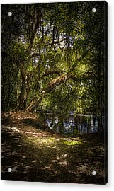 River Oak Acrylic Print by Marvin Spates