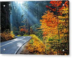 Road To Glory  Acrylic Print by Lynn Bauer