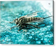 Robber Fly Pm Blue Ceramic Plate Acrylic Print by Douglas Barnett