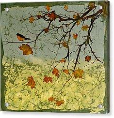 Robin In Maple Acrylic Print by Carolyn Doe