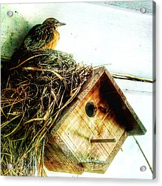 Robin Nest On Wren House Acrylic Print by Patricia Januszkiewicz