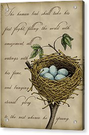 Robin's Nest Acrylic Print by Christy Beckwith