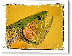Rock Creek Rainbow Acrylic Print by Lauren Leigh Hunter Fine Art Photography