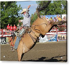 Rodeo Acrylic Print by Bruce  Morrell
