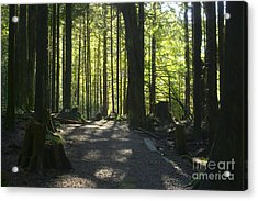 Rolley Lake Trail Acrylic Print by Sharon Talson